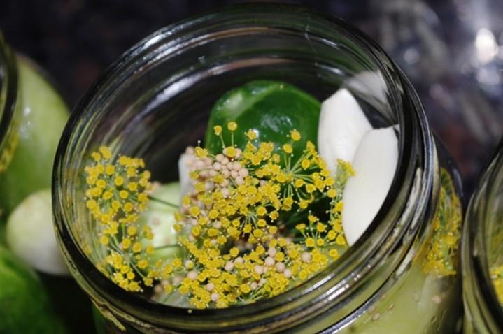dill mustard garlic