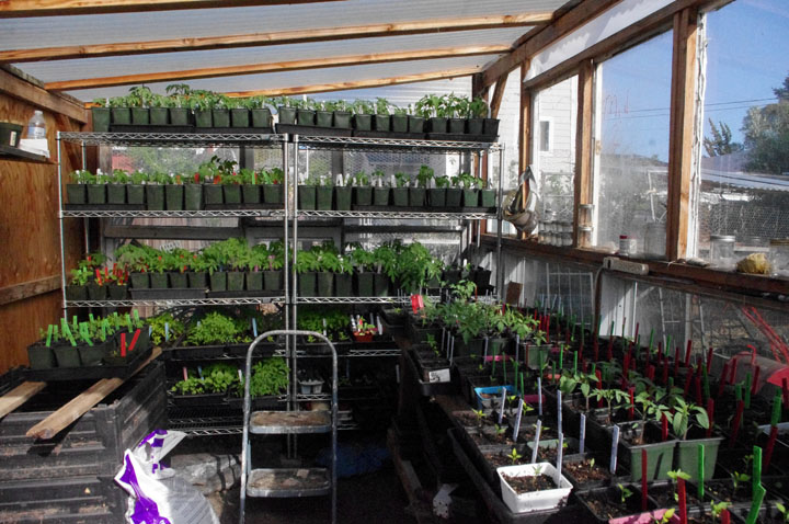 Building A Greenhouse For Next To Nothing Compared