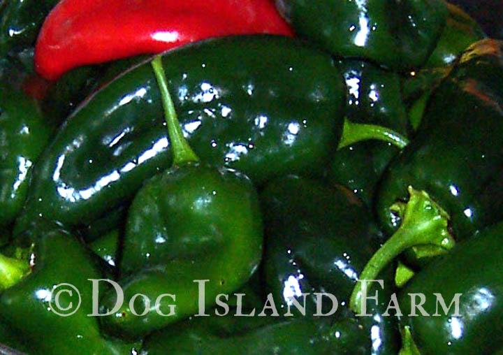 ... pepper for stuffing. Green peppers are called Poblanos and red peppers