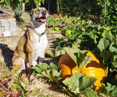 squeek pumpkin
